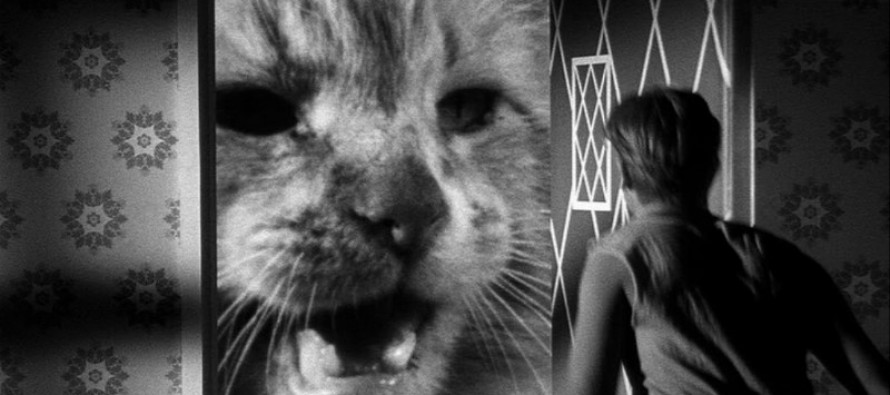 Richard Matheson prepara el reboot de The Shrinking Man