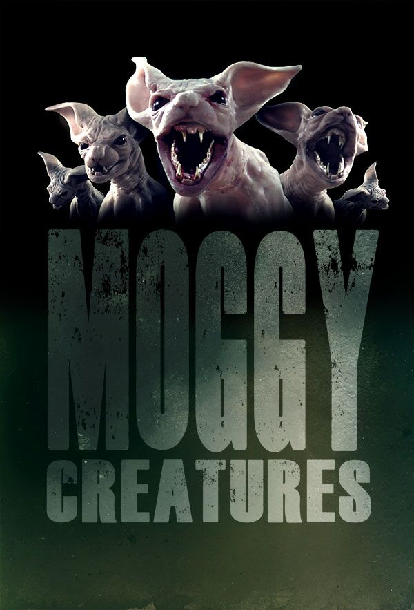 moggy-poster