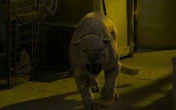 Nicolas Cage contra un jaguar en Primal